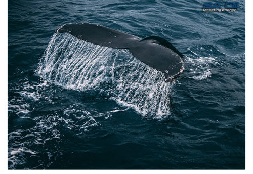 SA Oil discusses how petroleum saved whale species